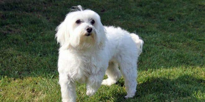 Animali domestici consigli for Cani da tenere in casa