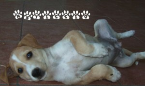 Un tenerissimo cucciolo meticcio