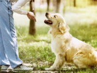 Addestramento del cane: consigli base