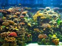 ABC dell'acquario, come iniziare