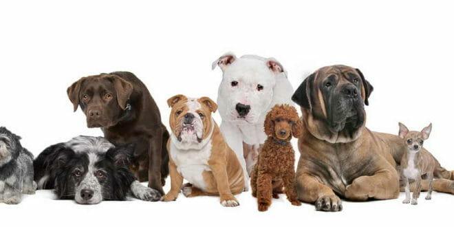 Cani: varietà di razze