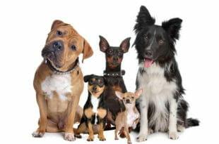 Guida alla scelta del cane