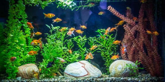 Il filtro dell 39 acquario tutti i segreti consigli for Filtro x acquario