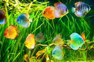 Illuminazione dell'acquario