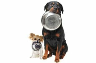 Consigli alimentazione dei cani