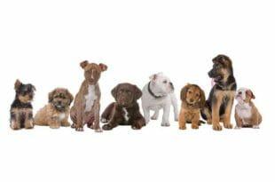 Cuccioli di cane, quale scegliere?