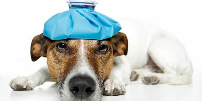 Le malattie del cane