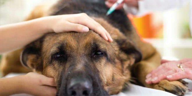 Vaccinazioni per il cane