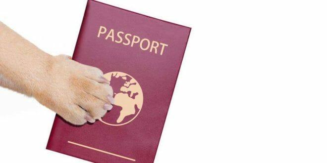 Passaporto per animali domestici