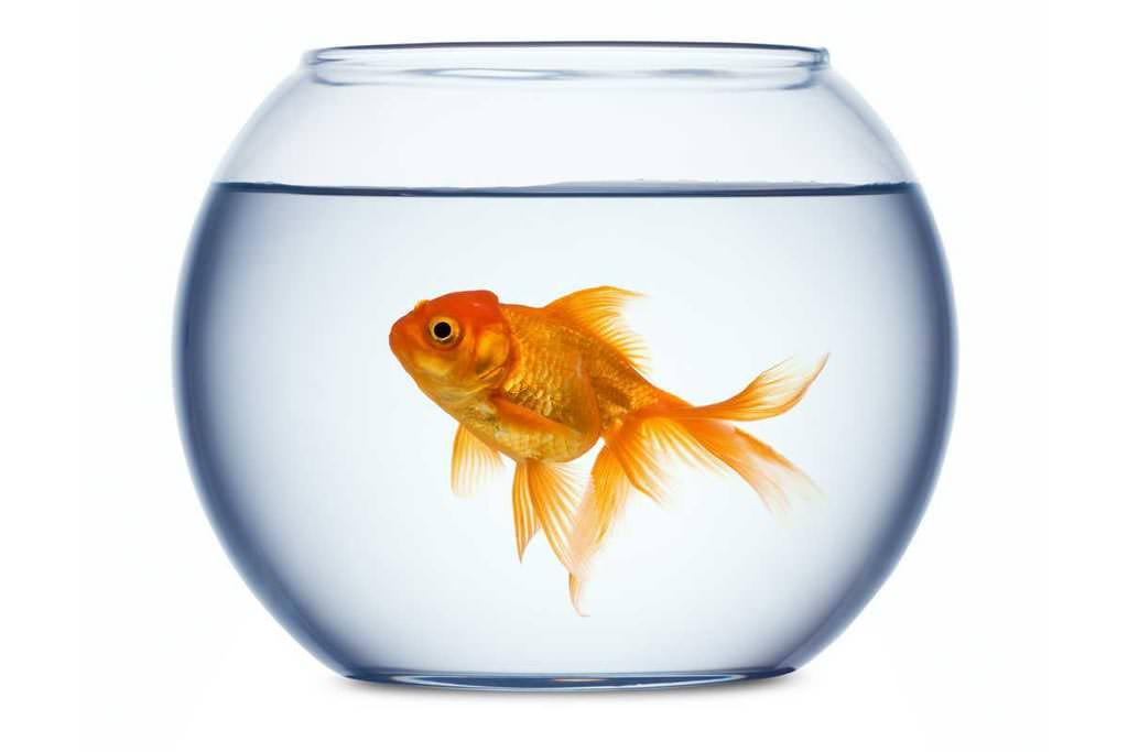 il pesce rosso qualche consiglio