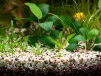 Le piante per l'acquario