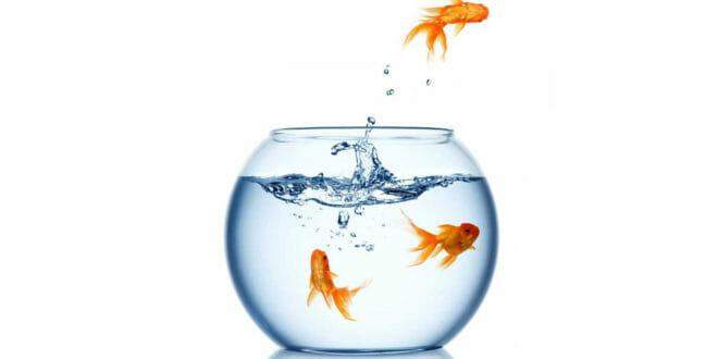 La salute dei pesci