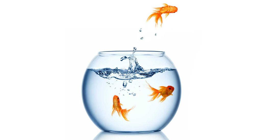 Pesci in acquario salute malattie e prevenzione for Acquario tartarughe e pesci insieme